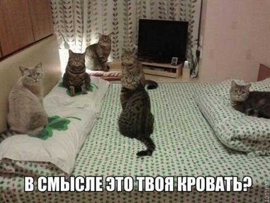 коты на кровати