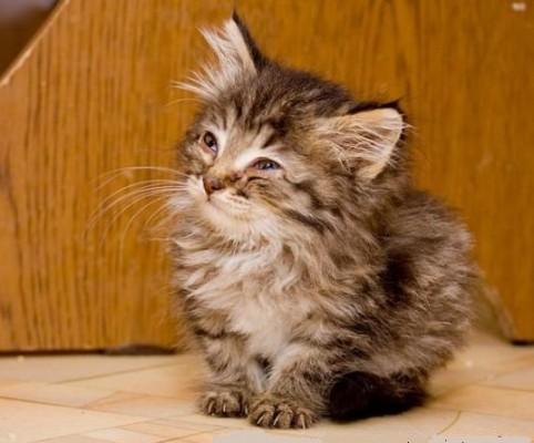 самый хитрый котенок