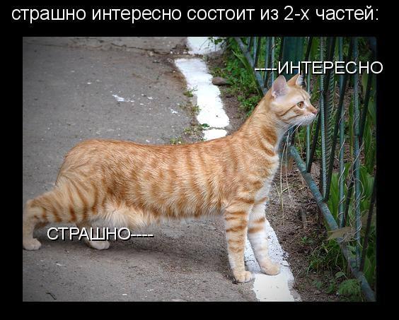 http://funkot.ru/wp-content/uploads/2015/02/strashno-interesno.jpg