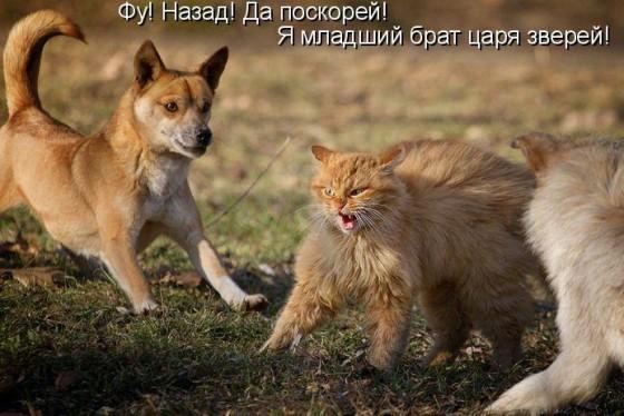 разборки котов и собак