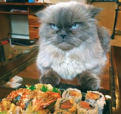 кот недоволен суши