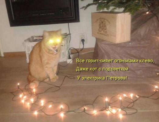 кот с гирляндой