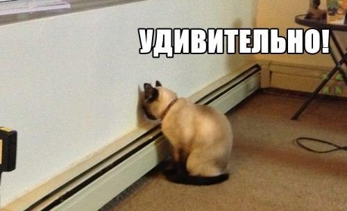кот удивителен