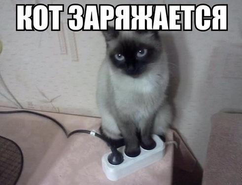 кот заряжается от розетки