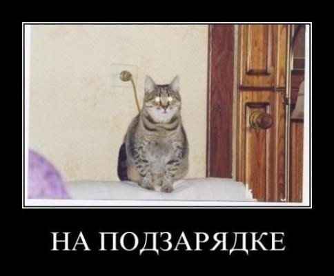 кот на подзарядке