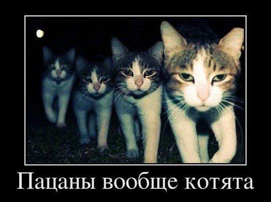 пацаны вообще котята