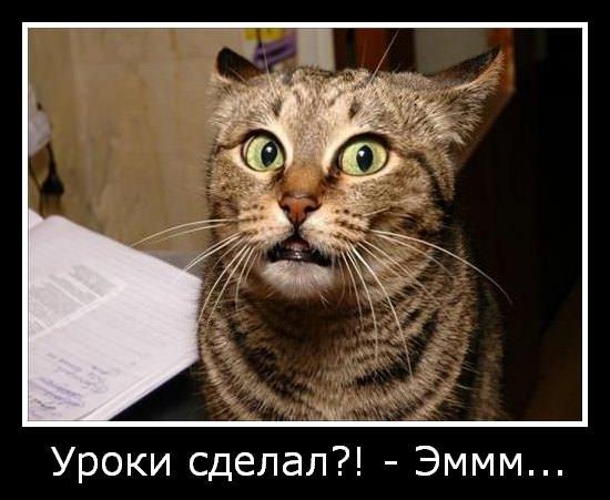 Мемы с котами с надписями