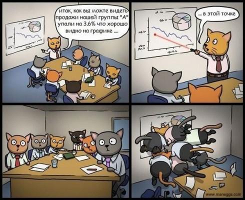 совещание котов и лазерный зайчик