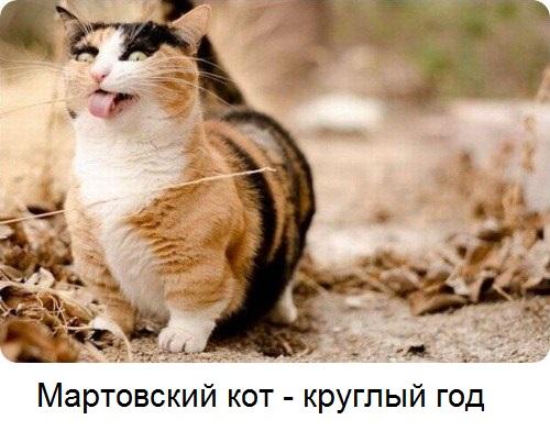 мартовский кот круглый год
