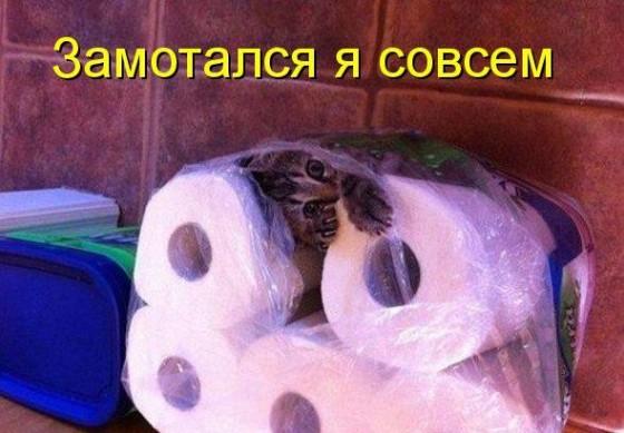 кот замотался в туалетной бумаге