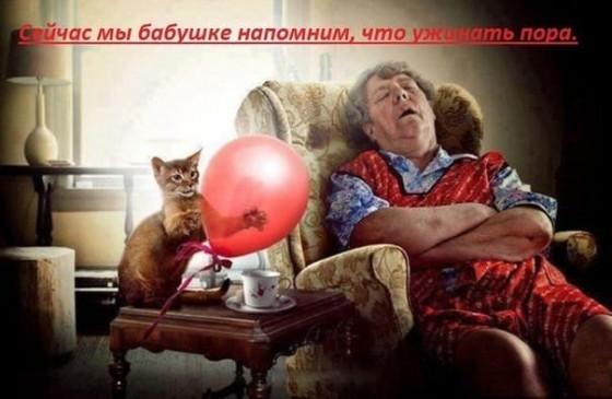 котик с шариком пугает бабушку