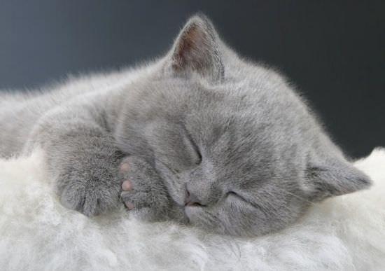 милый котенок спит