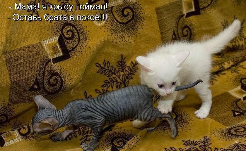 Статусы в картинках коты