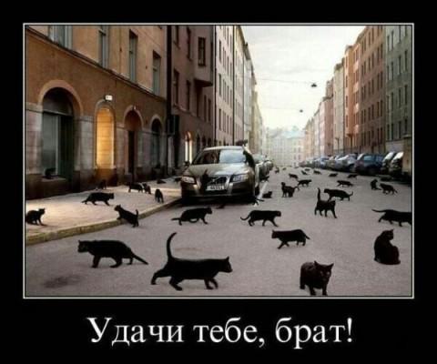 много черных котов