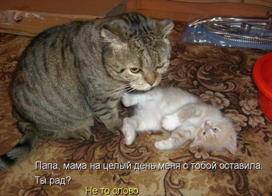 папа кот с котенком