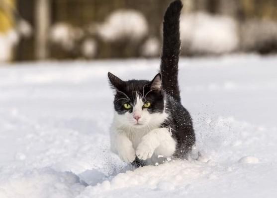 кот прыгает по снегу