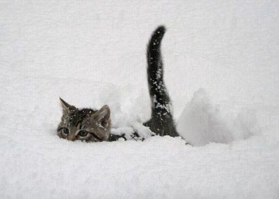 кот наполовину в снегу