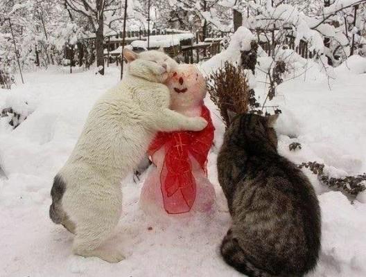 кот обнимает снеговика