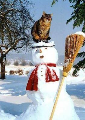 кот на снеговике