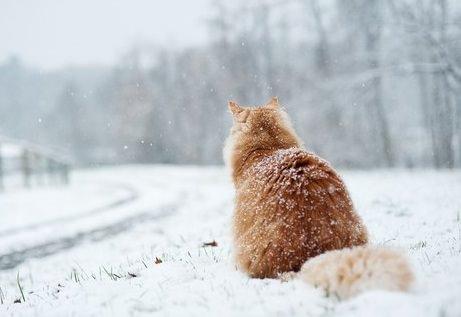 кот смотрит на первый снег