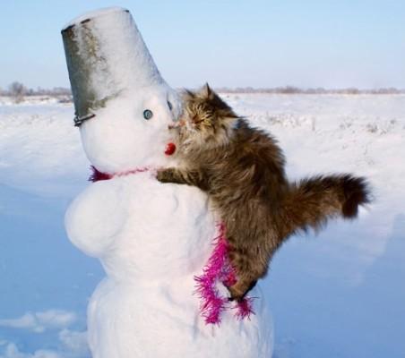 кот залез на снеговик