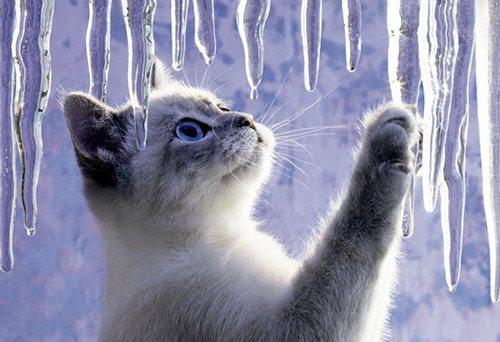 котенок и сосульки