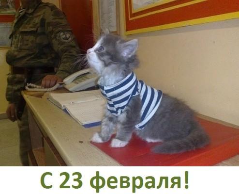 котенок в военной форме