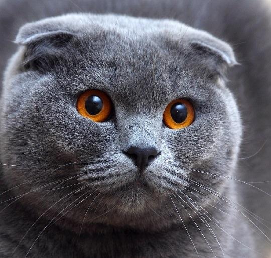 просто котята фото
