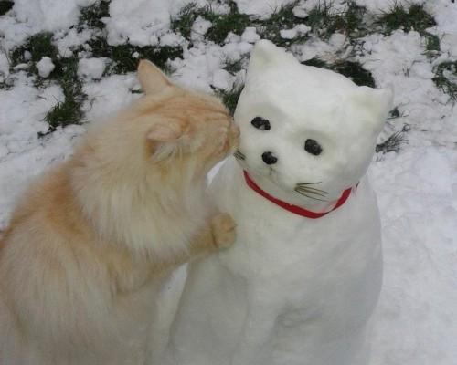 снеговик кот