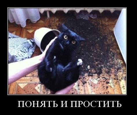 кот свалил горшок