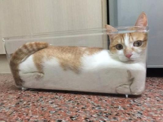 кот в аквариуме
