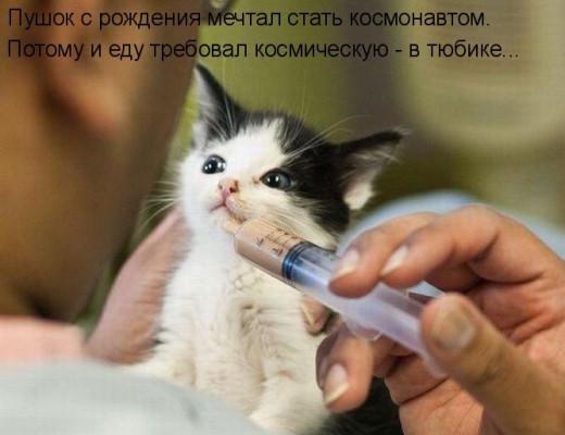 котенка кормят из шприца