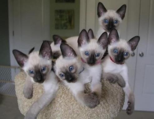 родились у нас котята