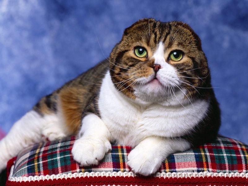 красивые кошки фото картинки