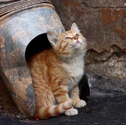 котенок под водосточной трубой