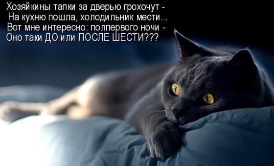 ночной дозор кота стих