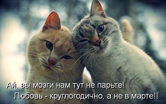 круглогодичная любовь котов