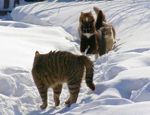 коты на зимней дорожке