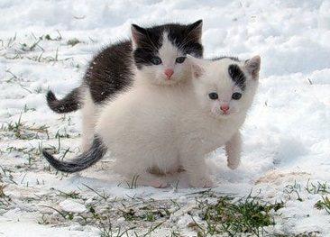 котята зимой