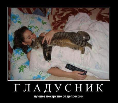 кот гладусник