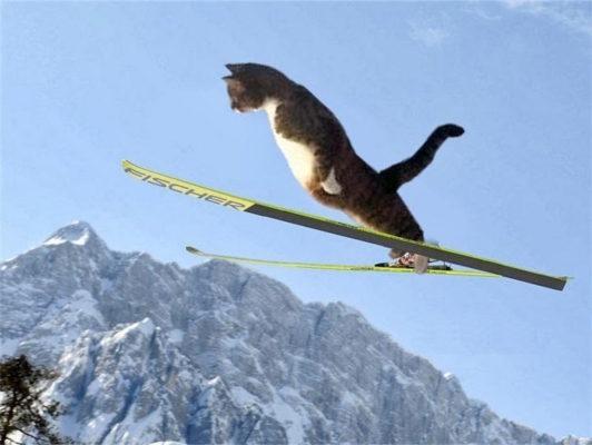 кот на лыжах