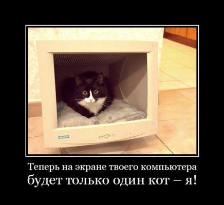 кот внутри монитора