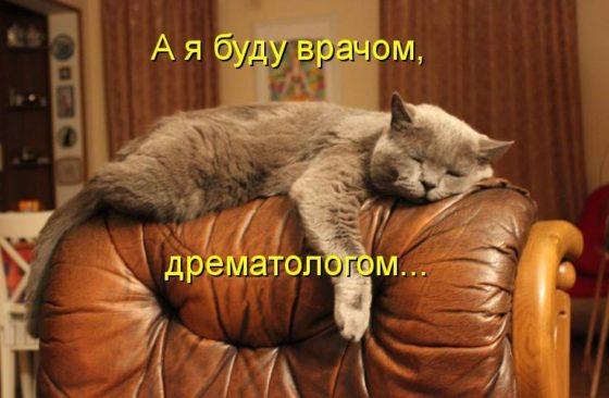 кот дремлет на кресле