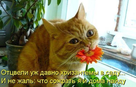 кот ест цветок